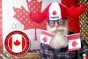 Mezitím někde v Kanadě 001 (Meanwhile in Canada)